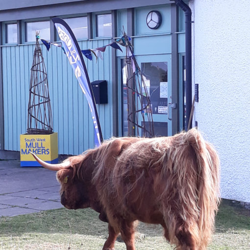 Highland cow at the entrance to the Columba Centre